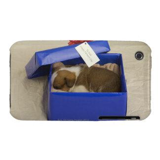 Perrito que duerme en una caja de regalo Case-Mate iPhone 3 coberturas