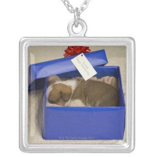 Perrito que duerme en una caja de regalo colgante cuadrado
