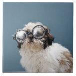 Perrito que lleva los vidrios gruesos azulejo cuadrado grande
