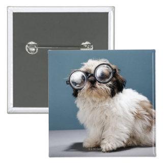 Perrito que lleva los vidrios gruesos pin