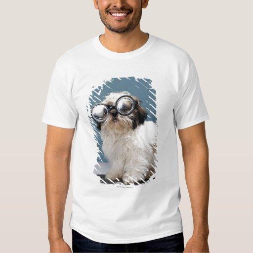 Perrito que lleva los vidrios gruesos camisas