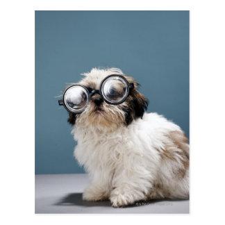 Perrito que lleva los vidrios gruesos postal