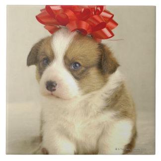 Perrito que lleva un arco rojo azulejo cuadrado grande