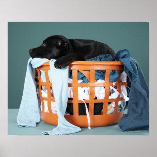 Perrito que miente en cesta de lavadero póster