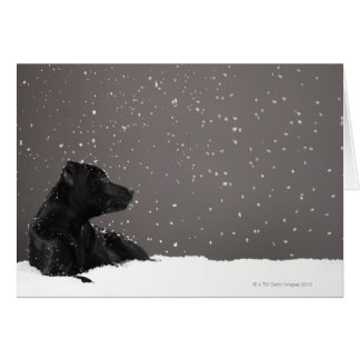Perrito que miente en copos de nieve de tarjeta de felicitación