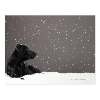 Perrito que miente en copos de nieve de tarjeta postal