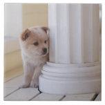 Perrito que mira a escondidas hacia fuera de detrá teja  ceramica