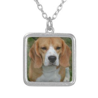 Perrito realmente lindo del beagle grimpola