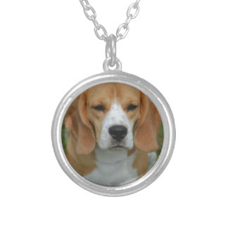 Perrito realmente lindo del beagle collar personalizado