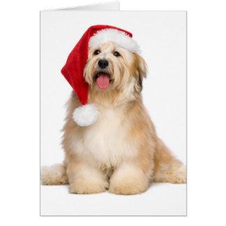 Perrito rojizo lindo de Havanese del navidad que Tarjeton
