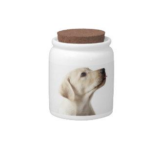 Perrito rubio de Labrador que pega hacia fuera la  Platos Para Caramelos