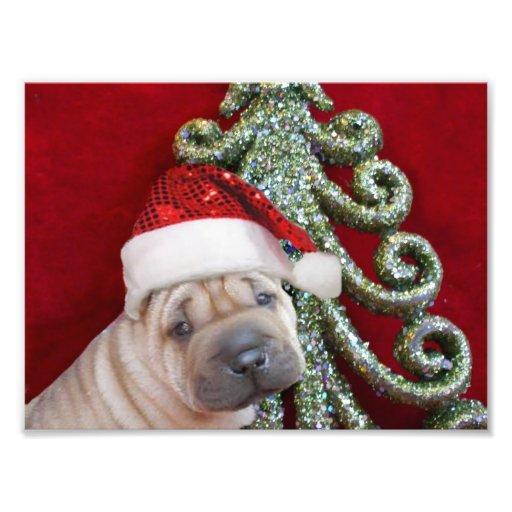 Perrito shar del pei del navidad fotografias