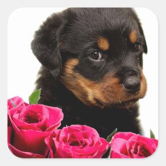 Perrito subió tarjeta del día de San Valentín de Pegatina Cuadrada