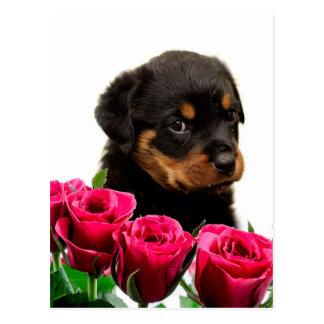 Perrito subió tarjeta del día de San Valentín de Tarjetas Postales