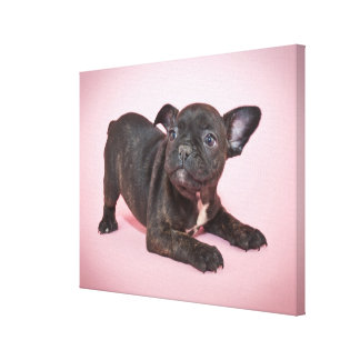 Perrito tonto del dogo francés listo para jugar lienzo envuelto para galerias