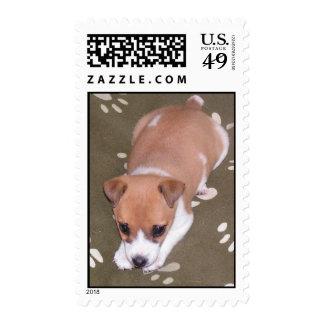 perrito tonto sellos