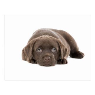 Perrito ultra lindo de Labrador Tarjeta Postal
