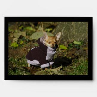 Perrito vestido elegante de la chihuahua sobre