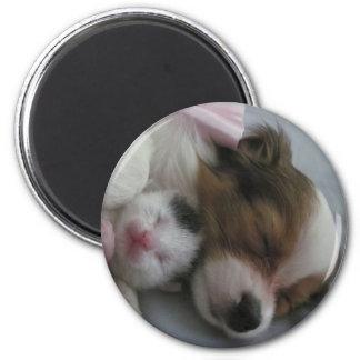 Perrito y gatito de Papillon Imán Redondo 5 Cm