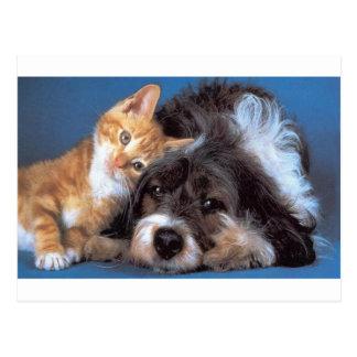 Perrito y gatito del Snuggle Postales