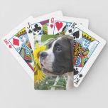 Perrito y girasoles del boxeador cartas de juego