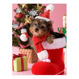 Perrito y navidad de Yorkshire Terrier Postal