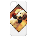 perrito y subió iPhone 5 coberturas