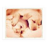 Perrito y un bebé tarjetas postales