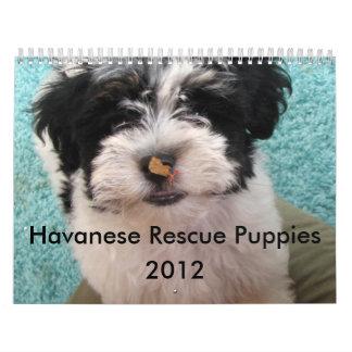 Perritos 2012 del rescate de Havanese Calendarios De Pared