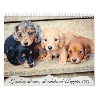 Perritos 2014 del Dachshund Calendario