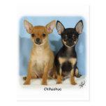 Perritos 9W079D-011 de la chihuahua Postales