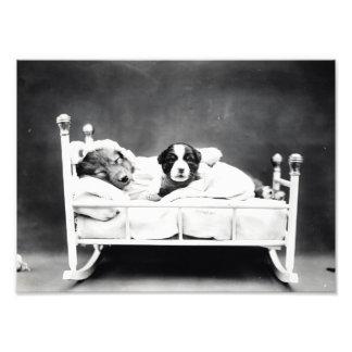 Perritos adorables del vintage B&W en la impresión Fotografía