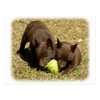 Perritos australianos 9P022D-018 del Kelpie Postales