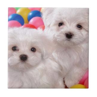 Perritos blancos en bolas coloreadas azulejo cuadrado pequeño