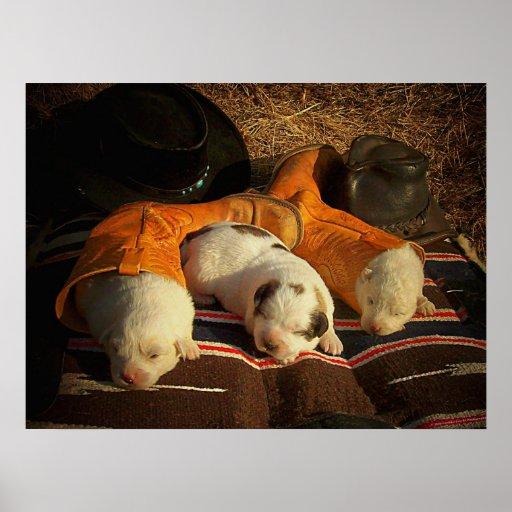 Perritos cansados del vaquero poster