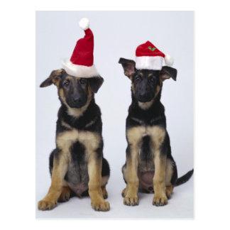 Perritos con los gorras de santa postal