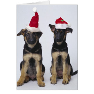 Perritos con los gorras de santa tarjeta de felicitación