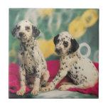 Perritos dálmatas azulejo cuadrado pequeño