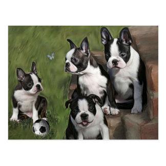 Perritos de Boston Terrier Postal