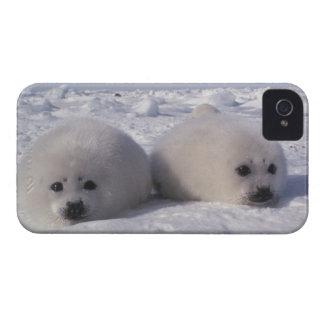 Perritos de foca de Groenlandia de la foca de Groe iPhone 4 Case-Mate Protector