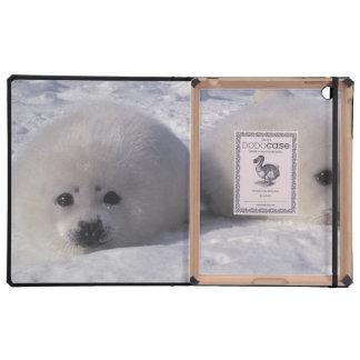 Perritos de foca de Groenlandia de la foca de Groe iPad Funda