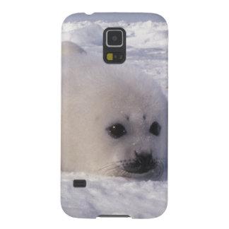 Perritos de foca de Groenlandia de la foca de Groe Carcasa Para Galaxy S5