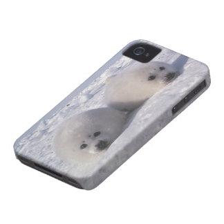 Perritos de foca de Groenlandia de la foca de Groe Case-Mate iPhone 4 Cárcasas