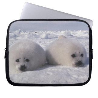 Perritos de foca de Groenlandia de la foca de Groe Manga Portátil