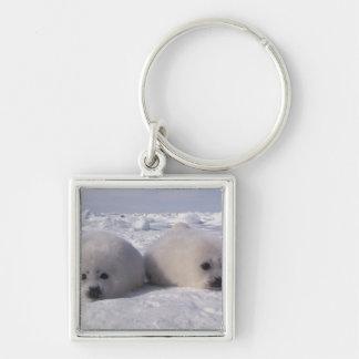 Perritos de foca de Groenlandia de la foca de Groe Llavero Cuadrado Plateado