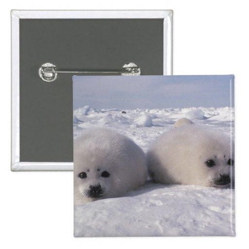 Perritos de foca de Groenlandia de la foca de Groe Pin Cuadrada 5 Cm