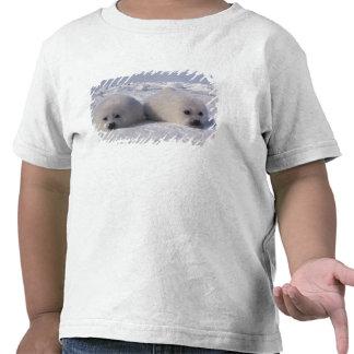 Perritos de foca de Groenlandia de la foca de Camiseta