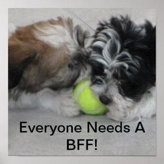 Perritos de Havanese - amistad - BFF Póster