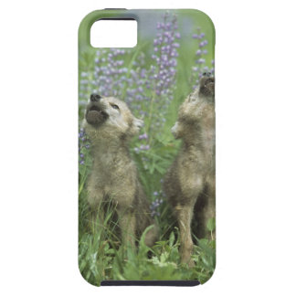 Perritos de lobo que gritan en prado iPhone 5 fundas