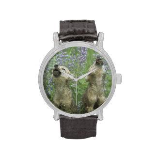 Perritos de lobo que gritan en prado reloj